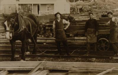 Loading timber with horse drawn wagon at Mamaku