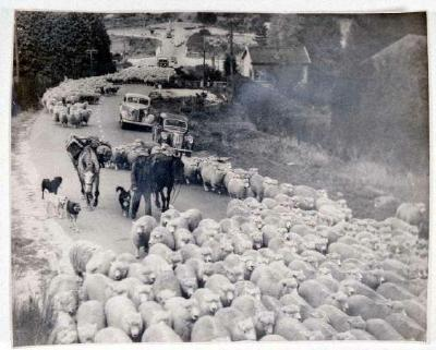Droving part of mob of 45,000