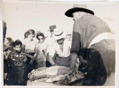 Catch of Hapuka, taken by C.R (Darkie) Lloyd, Winiata Tapsell and ?, near Plate Island B.O.P, photo W Tapsell (left) and C.R Lloyd (right) cleaning fish